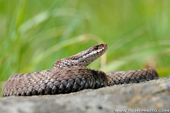 Common Adder