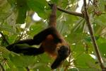 Spyder Monkey photography