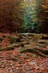 Šumava (Kamené moře) fotografie